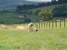 Dorfturnier 2006_32