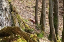 Scheibe 12 - Hornisse