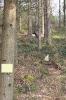Scheibe 28 - stehender Bär
