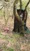 Scheibe 3 - Eule und Fuchs
